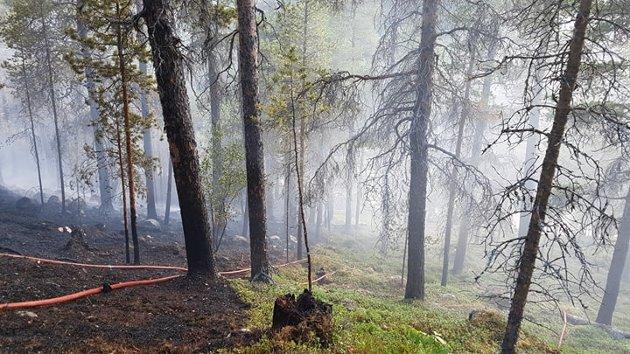 KNUSKTØRT: 110-sentralen fikk melding om skogbrannen klokka 14.50.