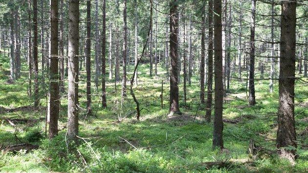 TILTAK: – Vi ønsker å hjelpe politikerne litt på vei, og kommer derfor med en liste med tiltak som vil bidra til å utnytte Innlandets ressurser, skriver klyngeleder Knut Skinnes i Norwegian Wood Cluster.