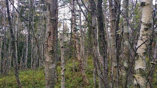 Å ikke se skogen for bare trær.