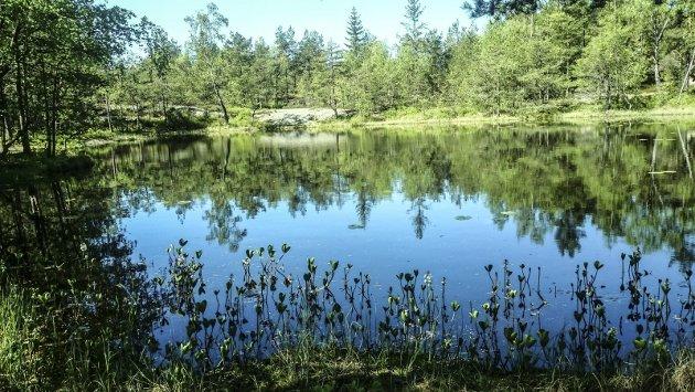 «Blir ødelagt»: – Blir dammen gjerdet inn, er tilgangen til og opplevelsen av denne naturperlen ødelagt for alle som har glede av den i dag, skriver Bjerkely. Foto: Hans Jan Bjerkely