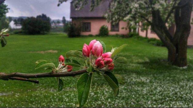 De Nære Ting: Blomstring i Riddergården. Foto: Anne Lise Hundstad