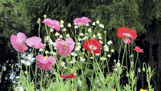 – Jeg klarte å plukke blomster i år også, skriver Grete Moræus Stray. En sann glede - som man kan bedrive i vakre Kulås. Også mens byen er i omstilling. (Illustrasjonsfoto: NTB Scanpix)