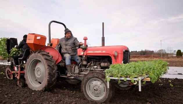 Massey Ferguson 35 fra 1962 gjør fortsatt nytta som plantetraktor på Huseby i Tjølling.
