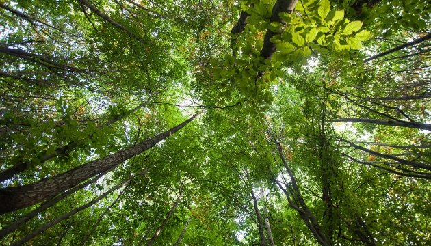 Trær - til glede eller besvær