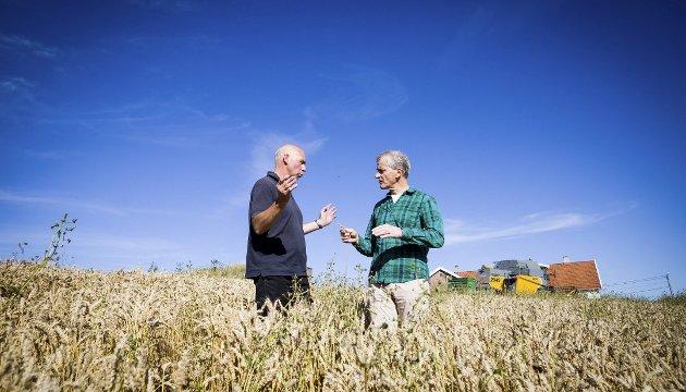 På Gårdsbesøk: Bonde Hallvard Berg (t.v.) fikk besøk av Ap-leder Jonas Gahr Støre på gården sin. Berg driver med kornproduksjon og er opptatt av jordvern.alle Foto: Lisbeth Andresen