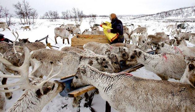 Rovviltpolitikken som føres i dag er i ferd med å frata livsgrunnlaget for de samiske beitenæringene. Store rovdyrtap fører til økonomiske og psykiske belastninger for reineiere og sauebønder. I hele landet har beitenæringene varslet krise som en følge av rovdyrtrykket, skriver sametingsråd Hans Ole Eira.