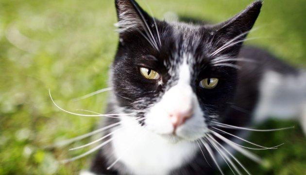 – Forebyggende: Innsenderen håper politikerne og kommuneledelsen i Eidsvoll finner midler til å fortsette støtten til tiltak for dyrevelferd – som det siste året har gått til prosjekter rettet mot ville katter. Illustrasjonsfoto: NTB scanpix