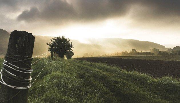 – Landbrukspolitikken må ivareta hensynet til dyrs og menneskers helse, til bosetting og livslyst i distriktene, til miljøet og kulturlandskapet, skriver Håkon Møller (MDG).