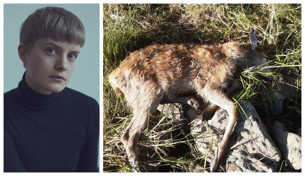 SKADD: Ein liten hjortekalv kika sløvt på meg på jordet nedanfor Sprakhaugen, skriv Berit Einemo Frøysland  om opplevinga på joggeturen.