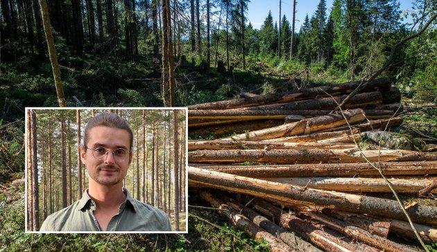 SKOG: Det er beklagelig at virkningen av storskala industriskogbruk i Innlandet ikke ses i sammenheng med andre miljøbelastninger og arealbeslag, skriver Ole Midthun, leder Naturvernforbundet i Innlandet.