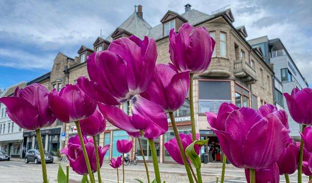 Fredrikstad blomstrer