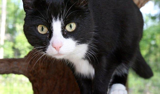 Hensyn: Katten fortjener å bli behandlet vel. foto: geir hansen