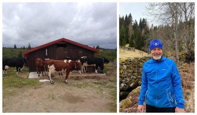 Trond Sundby vil heller at folk applauderer økologisk landbruk, enn å utrope kua som klimaversting.