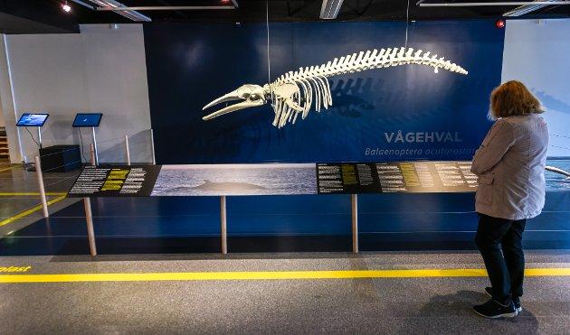 Helgeland museum åpning av nye MOment.