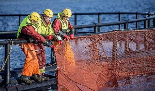 - De høye prisene for laksen i kombinasjon med en god produksjon i sjø førte til at 2018 ble et bra år for Lovundlaks, sier styreleder Thomas Andreassen. Vidar Langeland