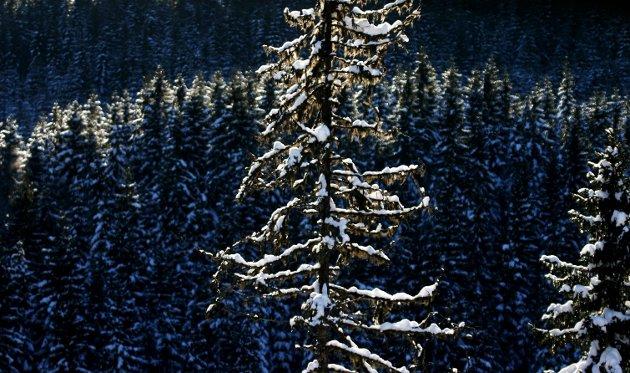 BÆREKRAFT: Bioøkonomi innebærer bruk av naturressurser, som skog. Akershus har muligheter til å lykkes med å utvikle næring innen feltet, skriver innsenderen. FOTO: Hallgeir B. Skjelstad