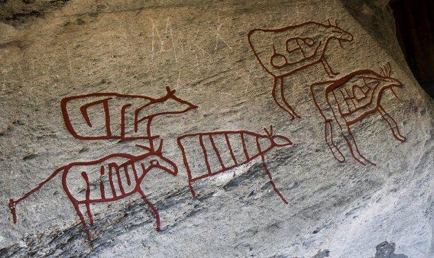 ELG: Helleristningene på Stein er de eneste kjente risningene i Hedmark med figurmotiv. I alt 16 elgfigurer er på Steinblokken som står under en vernebygning.