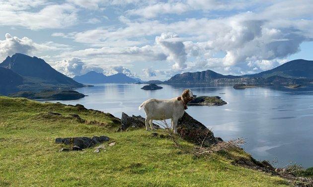 Utsikt over Helgelandskysten, hvor valget vil ha stor betydning!