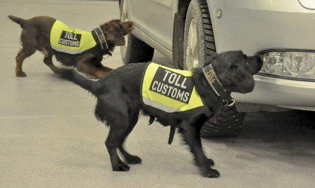 Teft for stoff: I løpet av åtte år har narkohunden Hatrick (t.v.) vært med på rundt 300 beslag. Nå har CC (t.h.) overtatt etter at Hatrick ble pensjonist.  Foto: Lise-Kari Holøs