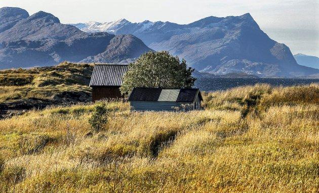 Galleri Nordland: Når gresset visner og dør. En kjølig vind står inn fra havet og bølger friskt gjennom det høstgule gresset i Bodøsjøen.