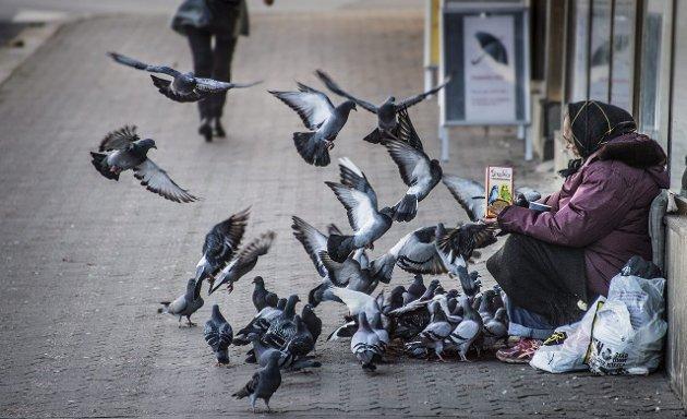 Venner: En tigger fra romfolket har fått seg noen gode venner i Fredrikstad.foto: Geir carlsson