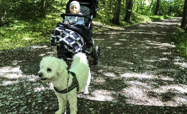 UT PÅ TUR: Jens Erik Mjølnerød forteller om flott turopplevelser med barnebarn og bikkje i Schultzedalen i dagens Signert. Foto: Jens Erik Mjølnerød