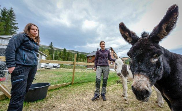 Paret Anne-Lise Drege Arntsen og Camilla  Drege Arntsen har flyttet til Rana sammen med sine to hunder og tre esler.