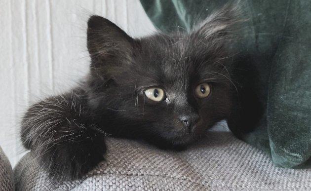 NY SAMBOER: Et nytt samboerskap har bydd på utfordringer for både kattemor og kattunge. Her er han avbildet i en «kjekk og grei»-periode.