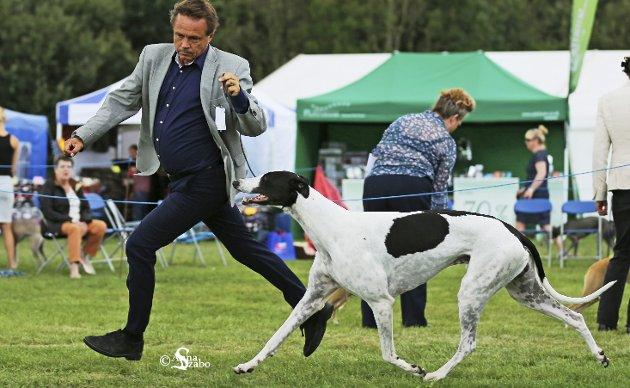 Mestvinnende i fjor: Espen i konkurranse i Richmond 2016 med Int.Ch. Jet's Man in the Moon. Hunden var i tillegg Norges mestvinnende hund i 2016.Foto: anna Szabó