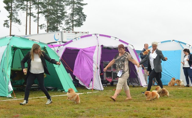 SMÅ MEN FLINKE: Pomeranians som viser hva de kan på en av postene.