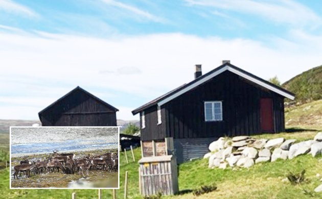 Bygningene er ikke verneverdige, og området må forbeholdes villreinen. - Forhåpentligvis er det noen der ute som også er opptatt av klassisk naturvern og som ser verdien av å ta vare på villreinstammen i Norge, skriver Roger Granum.