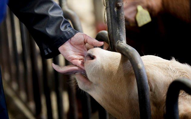 VELFERD: – Såkalt «grønnvasking» av dyrevelferd er når en merkevares fremstilles som om å utmerke seg på dyrevelferd, uten at dette er sant, skriver artikkelforfatteren.