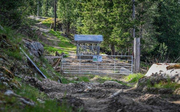 Stien, vegen opp til Skistua på Hammeren er sperret med grind, forhekk og en flokk olme okser og kyr. Arkivfoto.