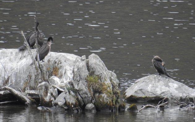 - Vi fiskere - også fiskebiologene - skjønner at ornitologene er begunstiget til å sitte øverst ved bordet, tett ved Elvestuens høysete, mens vi er henvist til nederst ved bordenden og må vente til mellomskarven har tatt sitt, skriver Arnt Orskaug.