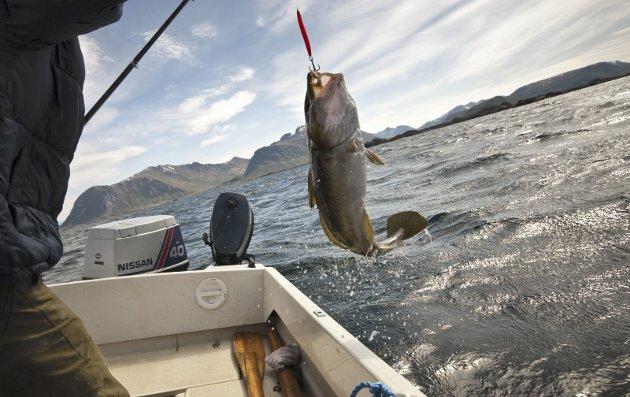 SJELDENT SYN:Naturvernforbundet er svært bekymret for Oslofjorden.
