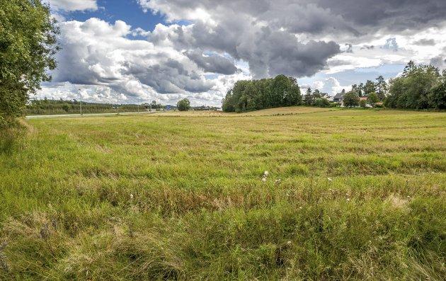 Det er flere forhold som taler for at Bjørnstadmyra ikke bør bygges ut, skriver Asbjørn Langsæter. (Foto: Johnny Helgesen)