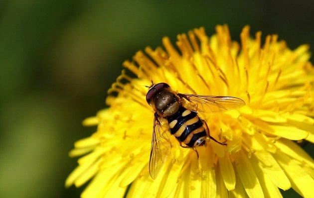 Fravær: Insektdøden bekymrer mange, nå ber mange om at trusselen tas på alvor.