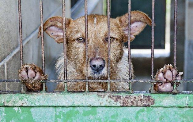 FØLELSER: – Det er liten grunn til å betvile at dyr har følelser. Men på et dressurkurs lærte jeg at en hund ikke kan føle skam, skriver Ingela Nøding i denne kommentaren.