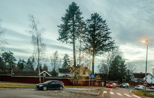 BORTE: Nordmannsedelgranene i Sentralkrysset ble felt før jul i 2018.