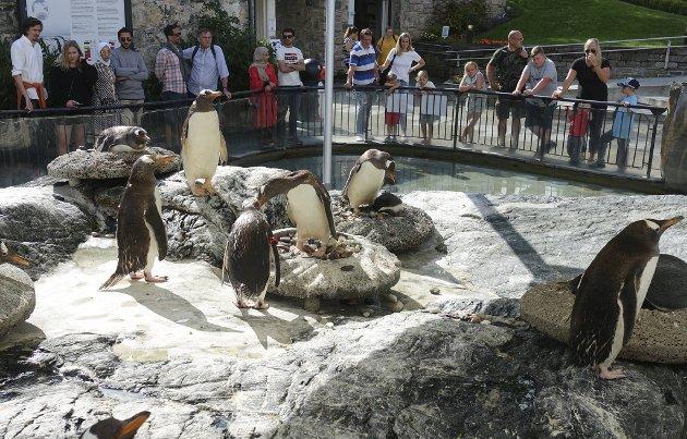 Vil du se                              pingvinene på Akvariet må du ha god råd!