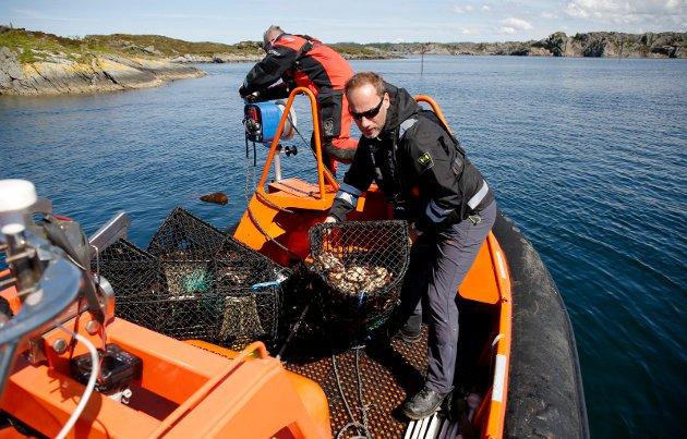 BESLAGLAGT: Fiskeridirektoratet ute på teinekontroll. Johan Rasmussen fra Fiskeridirektoratet og Øyvind Storesund bak. Teiner som er lovlige i åpning, men ikke er merket blir beslaglagt.