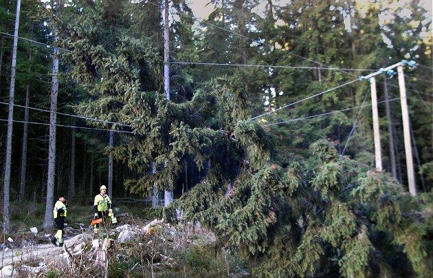 VINDFALL: 10. august blåste det kraftig i distriktet og mange mistet strømmen.