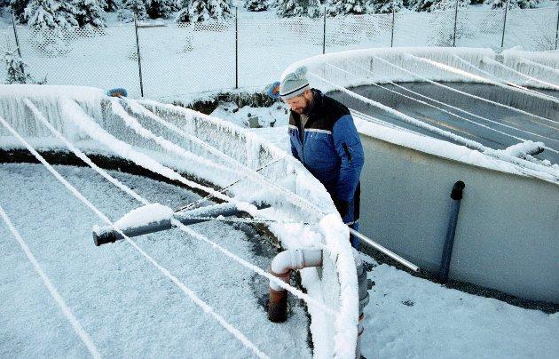 FROSSET IHJÆL: Jan Hageland hadde ansvaret for settefiskanlegget til Fjellstyrene i Oppland Settefiskanlegg, og kunne konstatere at fisken døde på grunn av at vanntilførselen hadde frosset, og karene kunne bunnfryse.