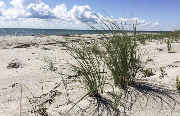 Feriesyssel: Det var deilig å ligge rett ut på stranda på Stokken og kikke på himmel, sjø og sand.
