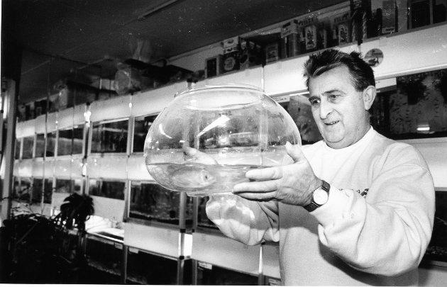 """""""Akvariefisken"""" 1993. Gullfisk i bolle går aldri av moten, men Sigbjørn Jamtli anbefaler ikke en så liten bolle som dette til en så stor fisk."""