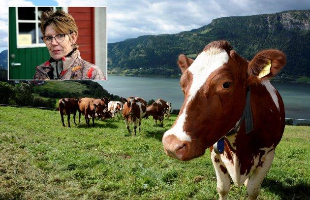 JORBRUK: En del husdyrproduksjon har overtatt kornarealene. Grasbaserte husdyrproduksjoner vil med en styrket lønnsomhet i korn og grøntproduksjonen, kunne gå tilbake til gras og beiteområdene. Et slikt grep vil styrke den totale lønnsomheta i norsk matproduksjon, og også den norske sjølforsyninga, skriver Astrid Olstad, leder i Oppland Bonde- og Småbrukarlag.