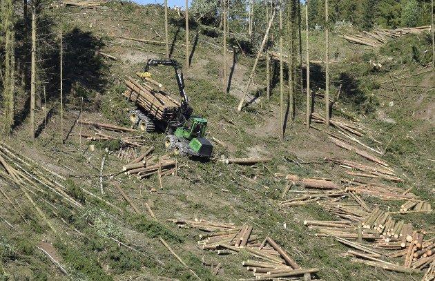 Skogsdrift: Tiden er for lengst moden for å styre skogbrukets målsettinger i mer natur- og miljøvennlig retning, sier Thomas Krogh i dette innlegget. Illustrasjonsfoto: Pål Tr. Mannsverk