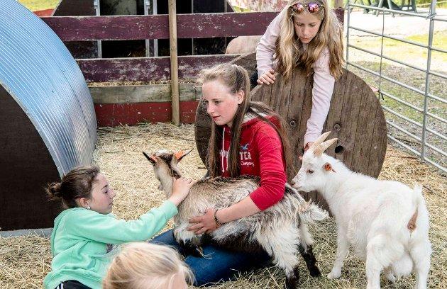 4H-erne på fylkesleir i Ås fikk i oppgave å stelle og passe alpakkaene på Gulli Gård i Kroer.