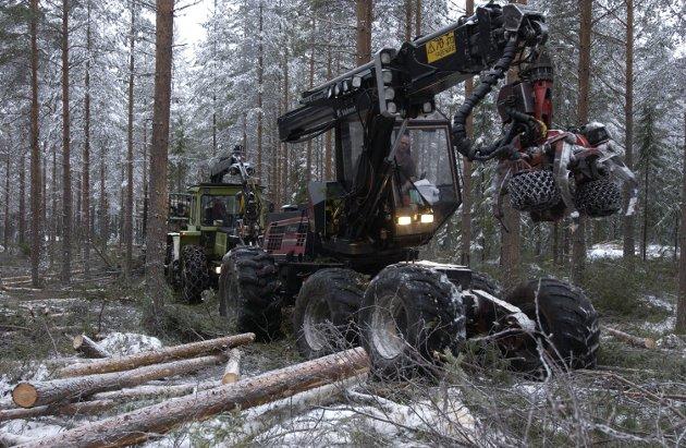 KOSTBART: Skogeiendommer går til høye priser om dagen. Det er et positivt signal for det grønne skiftet.