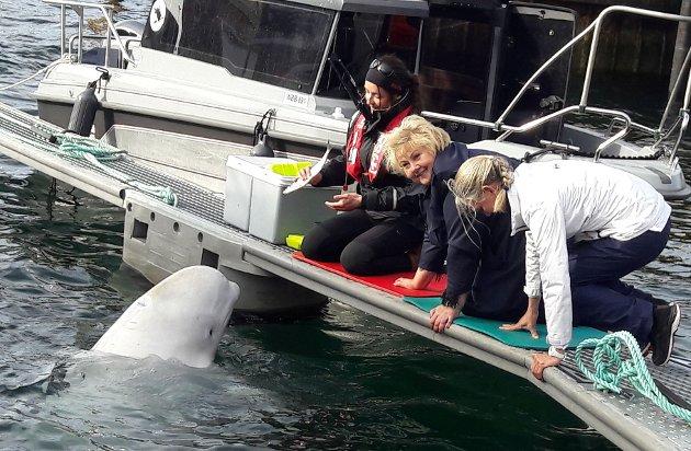 Besøk: Erna Solberg benyttet blant annet anledningen til å besøke Hvaldimir i havna i Hammerfest under besøket i Finnmark.